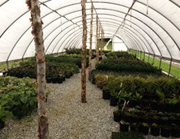 Colonial Acres Nursery Trees & Shrubs